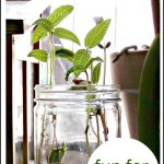 Indoor Gardening Fun: Growing Beansprouts