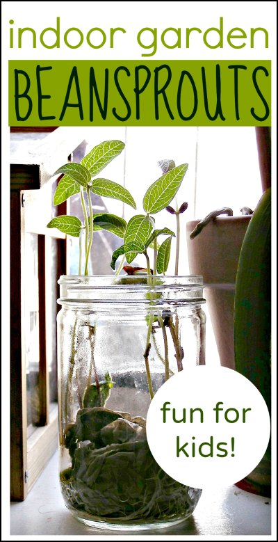 Grow beans indoors - a fun gardening project for kids!