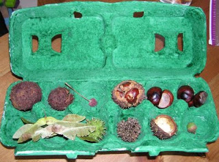seed collection in green cardton