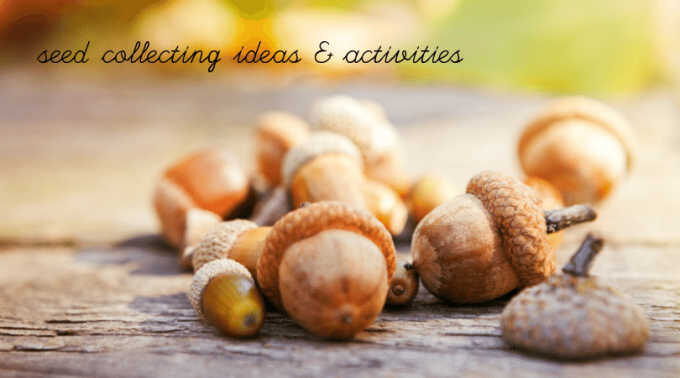 Acorns for seed collecting activities for kids