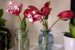 Weekend Bonus Post for Tulip Lovers