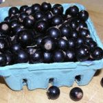 Weekend Bonus Post for Black Currant Lovers