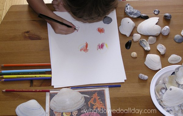 Seashell drawing project for kids with watercolor pencils