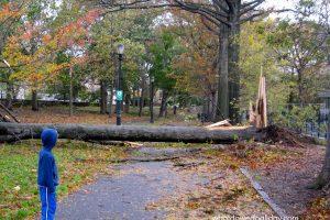 Hurricane Sandy in Prospect Park