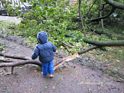 Hurricane Sandy in Prospect Park