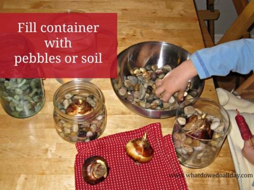 Bulbos de crecimiento en interiores, forzar bulbos, forzar, forcing interior, Amaryllis, Paperwhites: suministro de jardinero