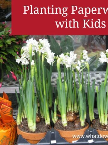 how to force paperwhites indoors