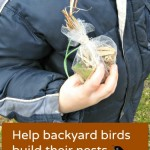 How to Help Backyard Birds Build Their Nests