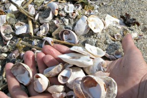 shell activities for kids to do at home - bring the beach fun home!