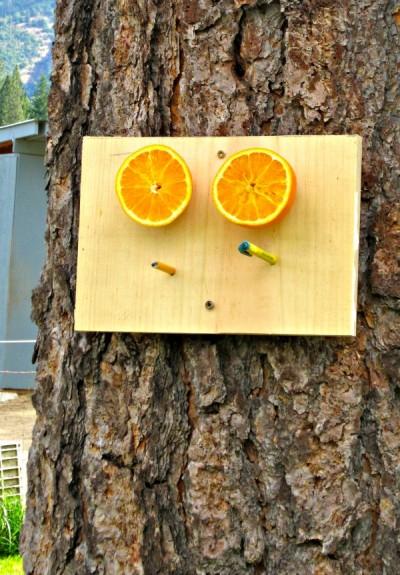 bird feeder oranges 3