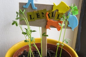 Cute homemade plant markers for kids to make