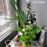 More Plant Science: Regrowing Vegetables from Scraps