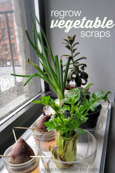 Introduce plant science to kids by regrowing vegetables indoors!