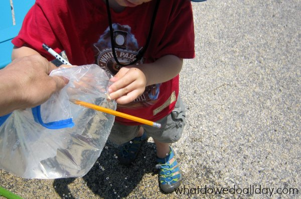 Bag and pencil science experiment.