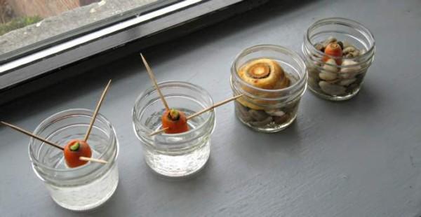 Regrow carrot scraps as an indoor nature activity in winter.