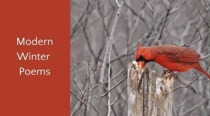modern winter poems for children and cardinal eating in winter