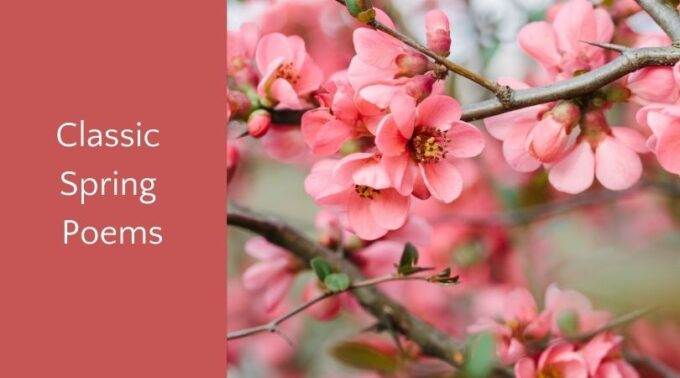 Pink apple blossoms with text classic spring poems